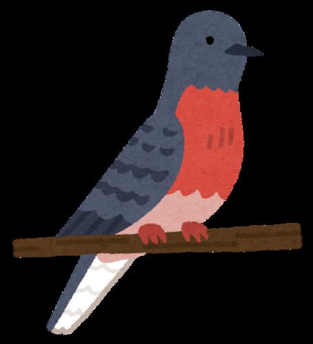 bird_hato_ryokoubato.png