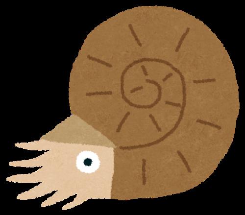 kodai_ammonite.png